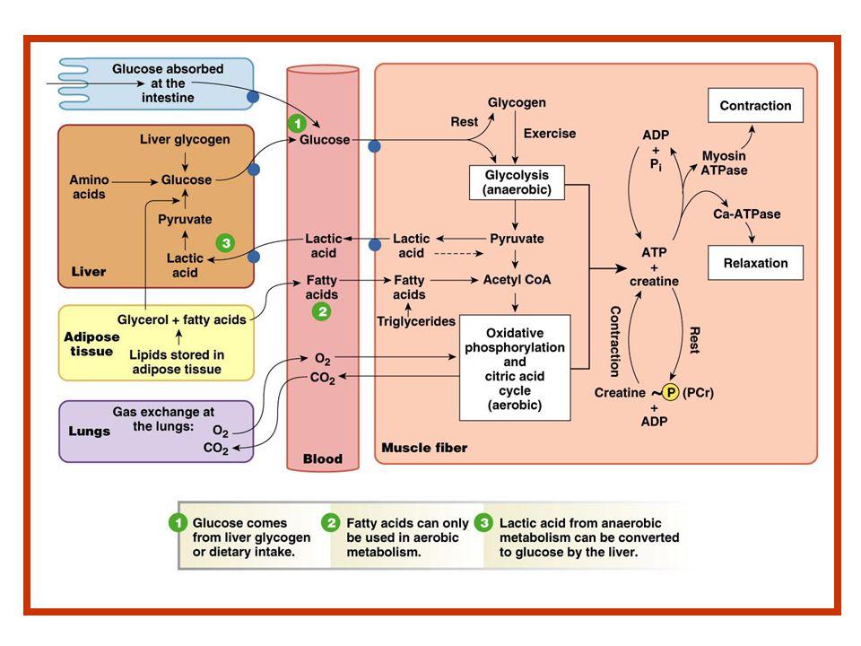 Aumento de glucosa y DESCENSO DE INSULINA??.