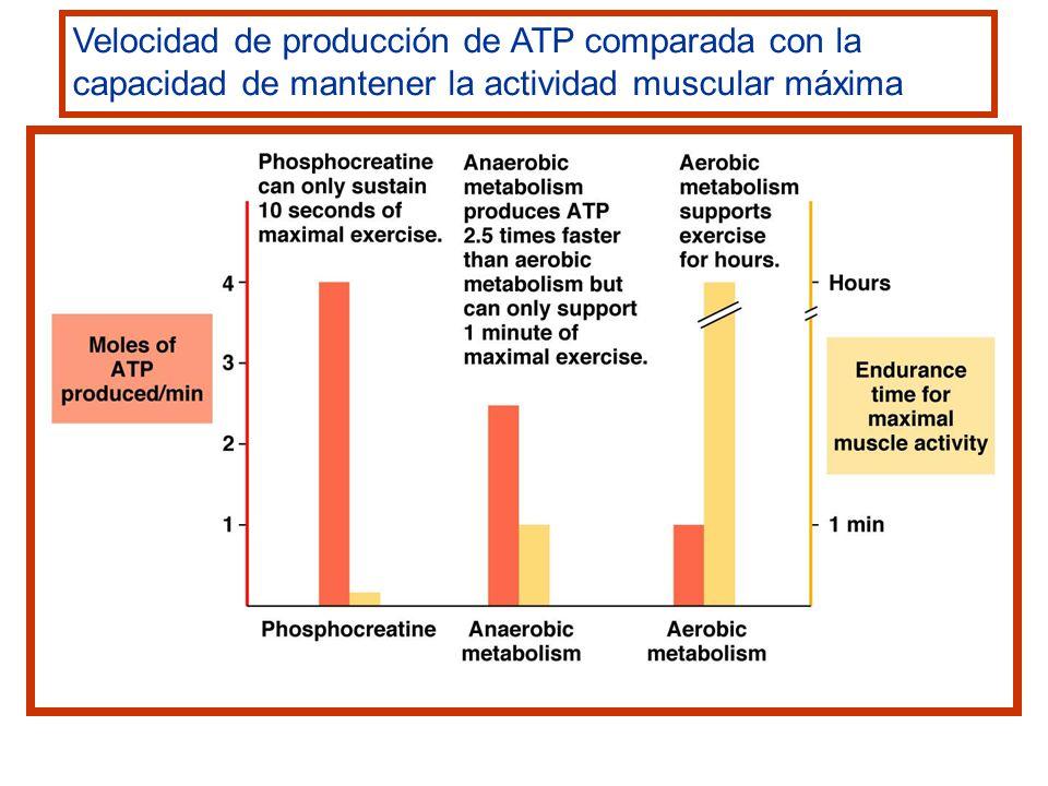 Sustratos para la producción de energía a medida que aumenta la intensidad del ejercicio