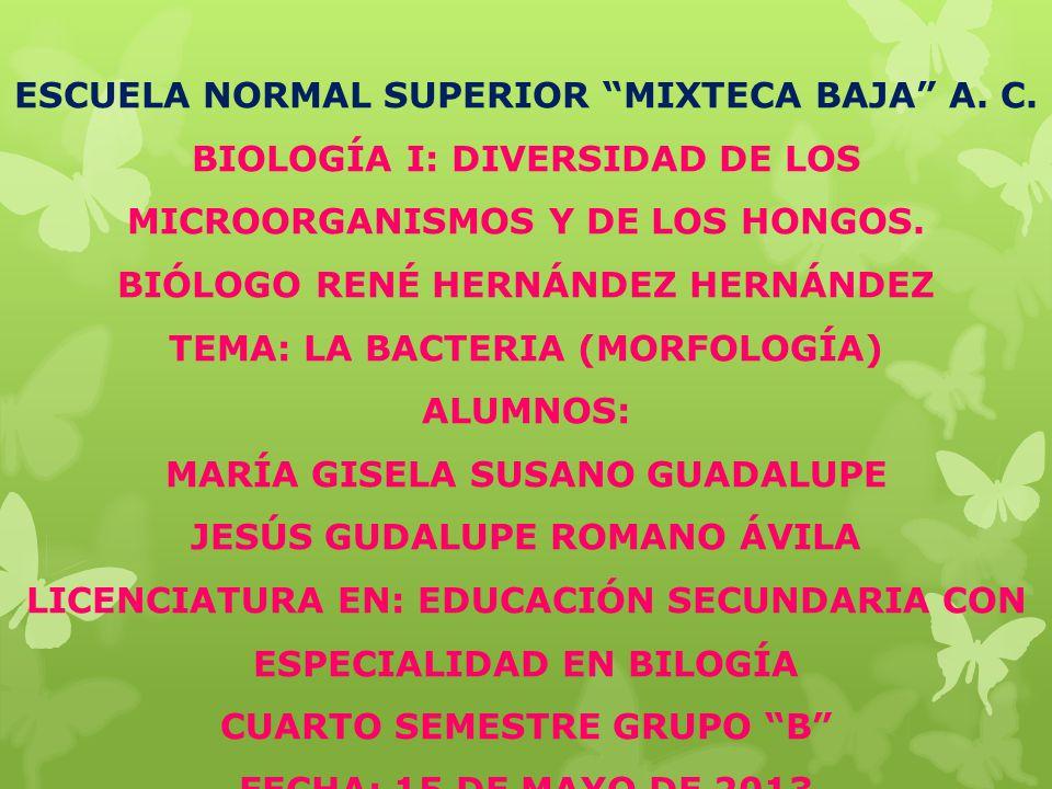 ESCUELA NORMAL SUPERIOR MIXTECA BAJA A.C.