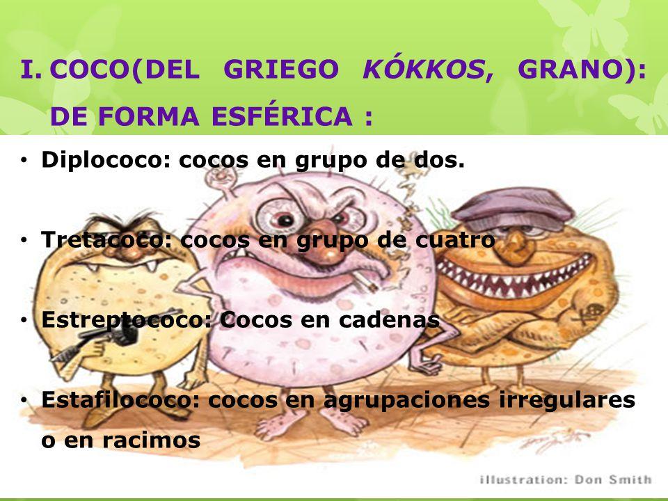 I.COCO(DEL GRIEGO KÓKKOS, GRANO): DE FORMA ESFÉRICA : Diplococo: cocos en grupo de dos.