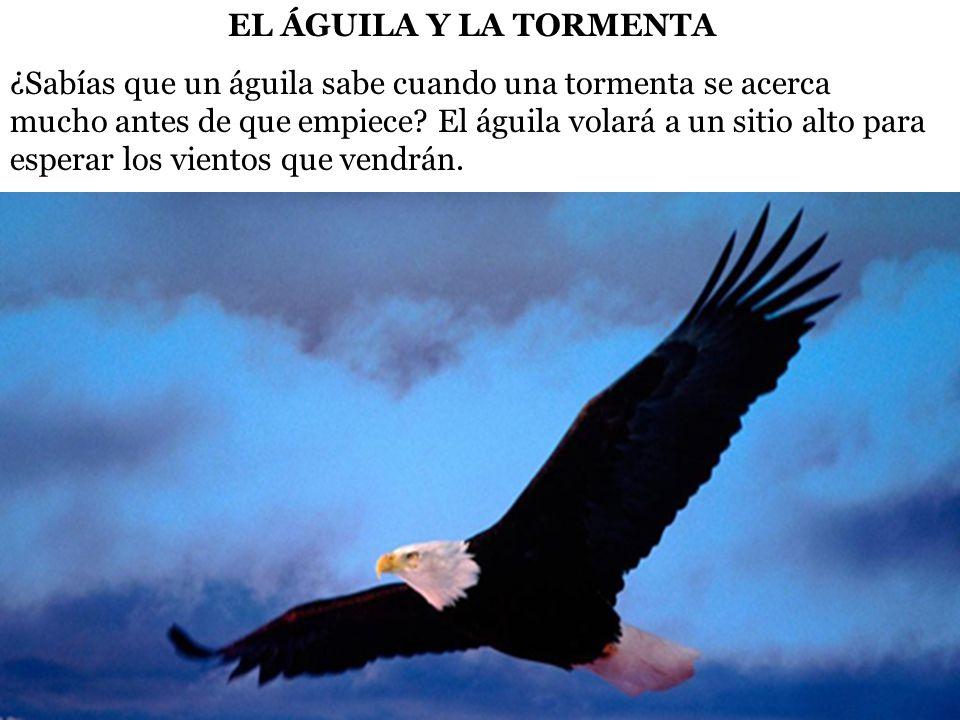 Cuando llega la tormenta, coloca sus alas para que el viento las agarre y le lleve por encima de la tormenta.