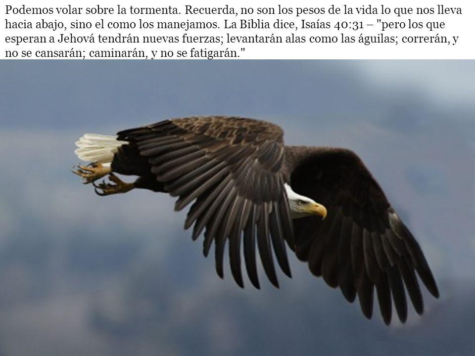 Podemos volar sobre la tormenta. Recuerda, no son los pesos de la vida lo que nos lleva hacia abajo, sino el como los manejamos. La Biblia dice, Isaía