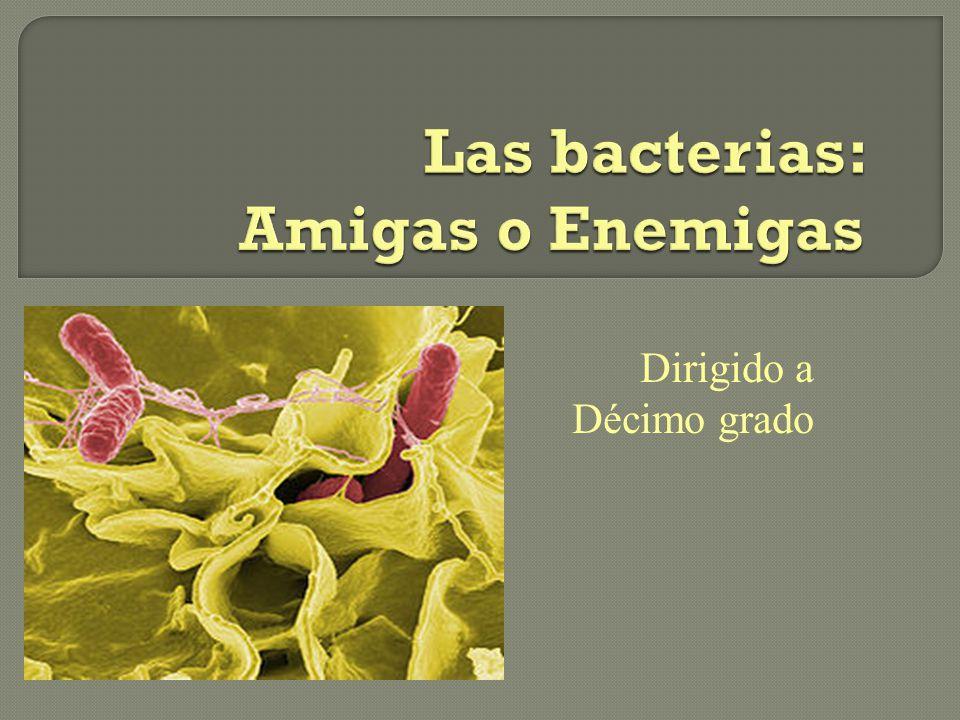 Objetivos Luego de terminar este módulo los estudiantes: Podrán clasificar los distintos tipos de bacterias por su morfología y composición de pared celular.