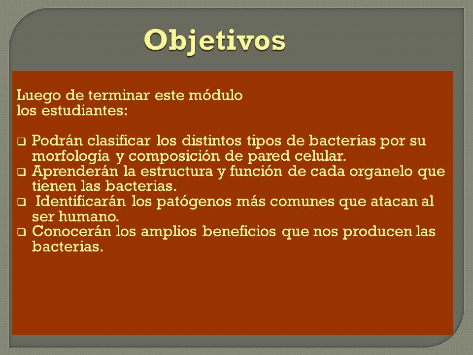 La mayoría de las bacterias se clasifican en tres grupos: cocos, bacilos, y espirilos. 1/3