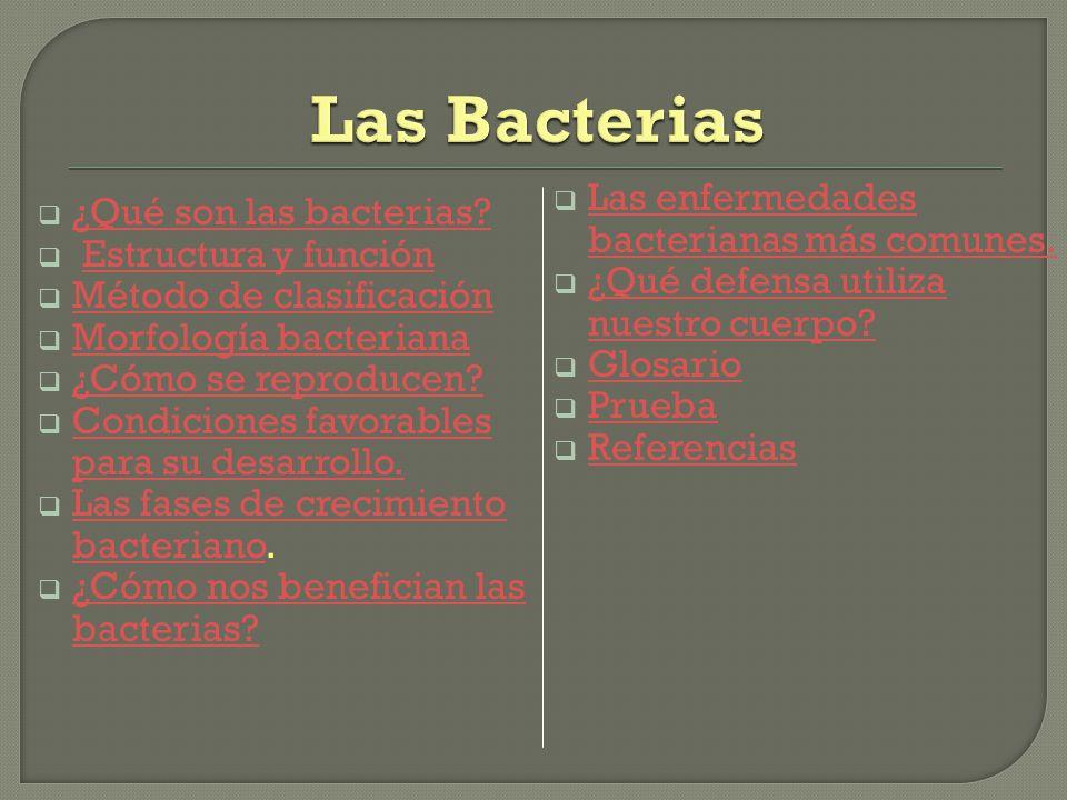 Las bacterias son microorganismos unicelulares que presentan un tamaño de algunos micrómetros de largo (entre 0,5 y 5 μ m, por lo general) y diversas formas incluyendo esferas, barras y hélices.