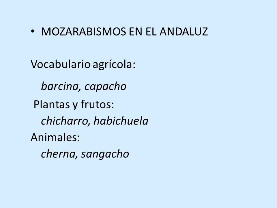MOZARABISMOS EN EL ANDALUZ Vocabulario agrícola: barcina, capacho Plantas y frutos: chicharro, habichuela Animales: cherna, sangacho