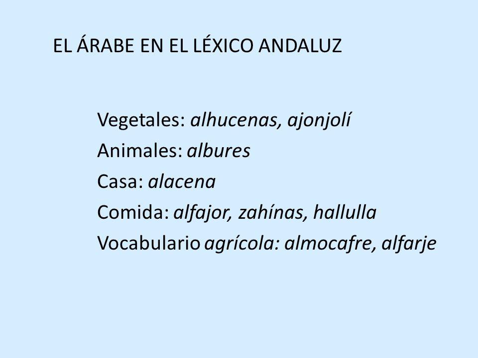 EL ÁRABE EN EL LÉXICO ANDALUZ Vegetales: alhucenas, ajonjolí Animales: albures Casa: alacena Comida: alfajor, zahínas, hallulla Vocabulario agrícola: almocafre, alfarje