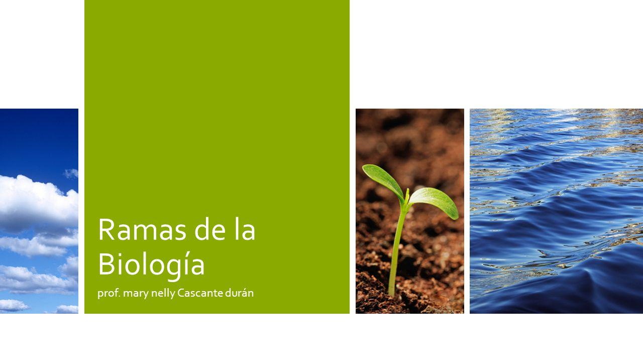 Etología Noveno nivleRamas de la Biología12