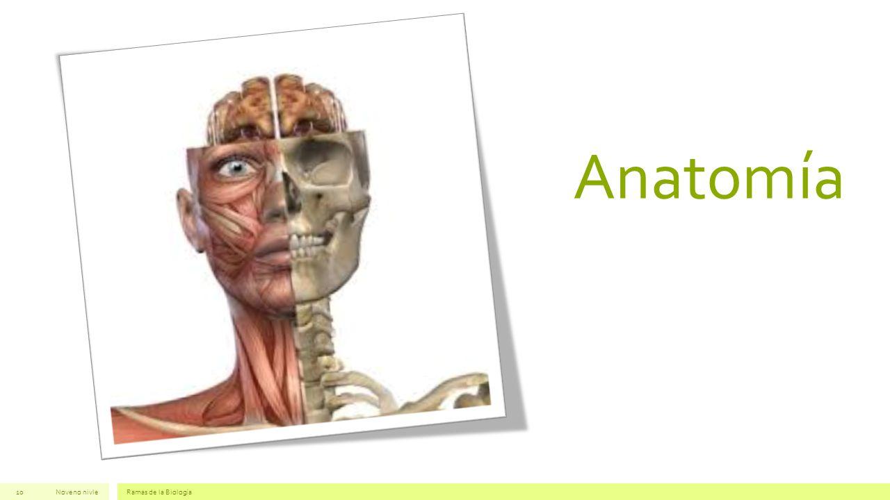 Anatomía Noveno nivleRamas de la Biología10