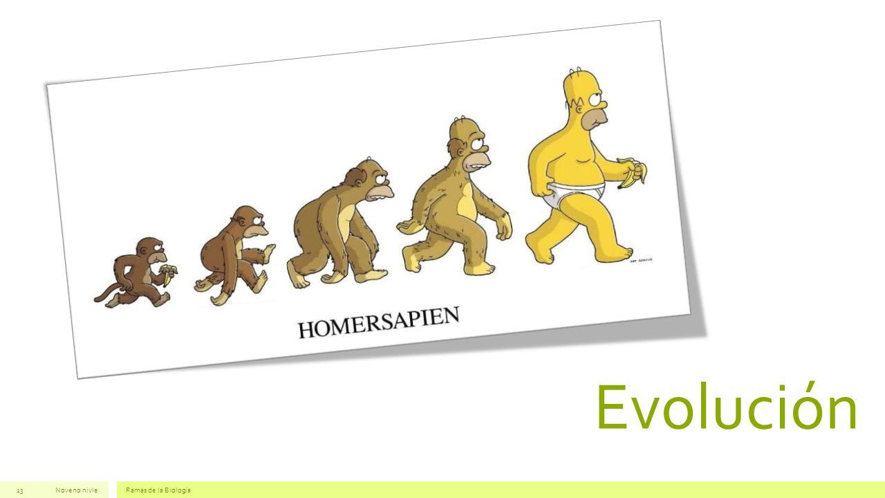 Evolución Noveno nivleRamas de la Biología13