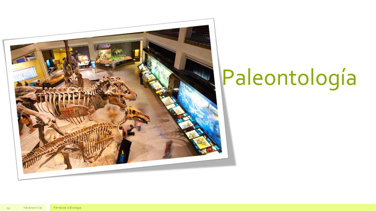 Paleontología Noveno nivleRamas de la Biología14
