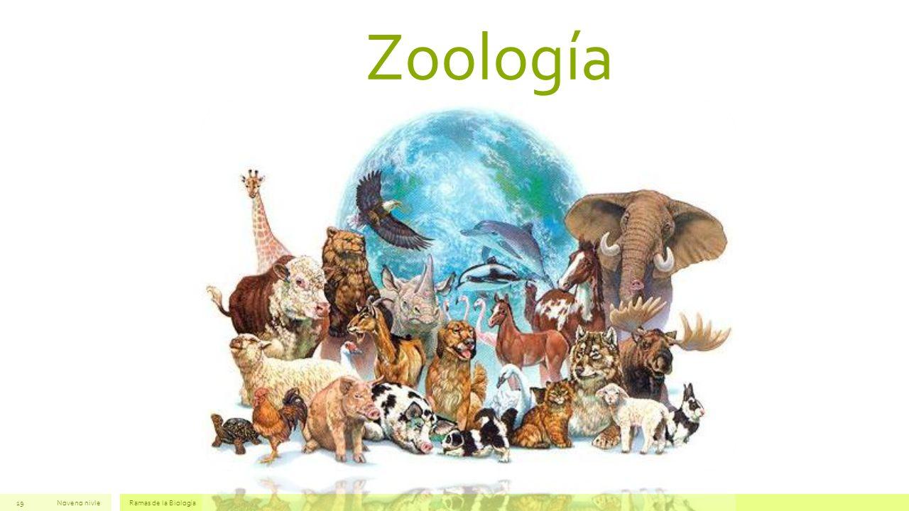 Zoología Noveno nivleRamas de la Biología19