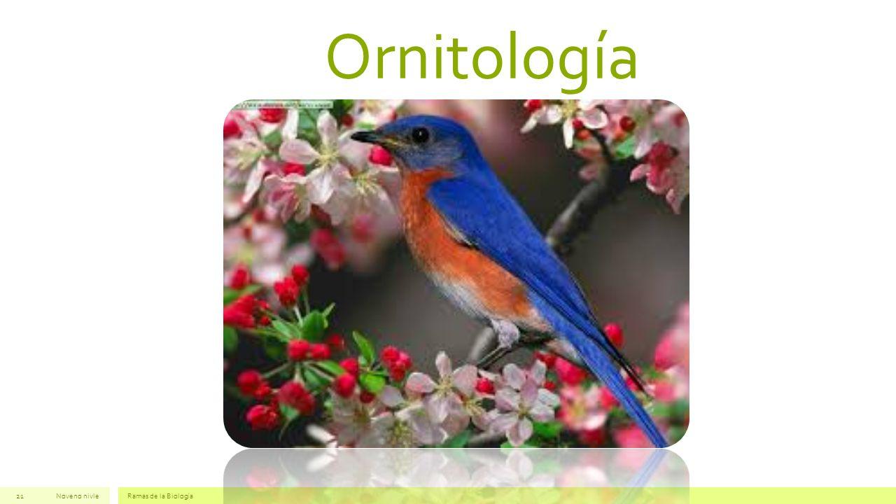 Ornitología Noveno nivleRamas de la Biología21