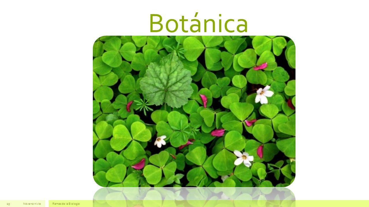 Botánica Noveno nivleRamas de la Biología25
