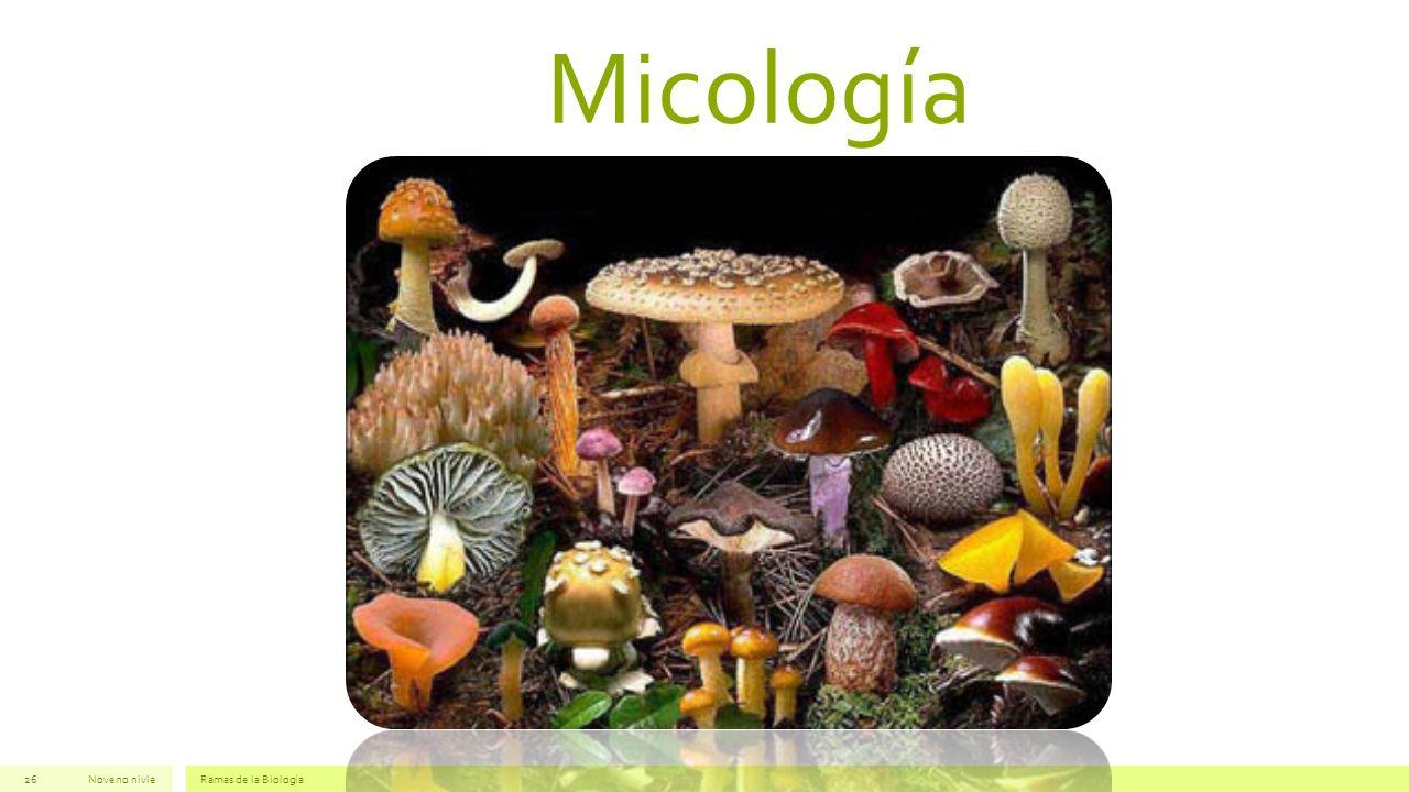 Micología Noveno nivleRamas de la Biología26