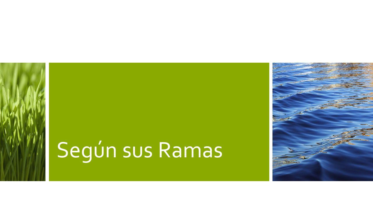 Según sus Ramas