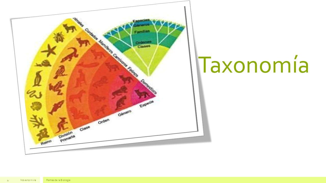 Taxonomía Noveno nivleRamas de la Biología4