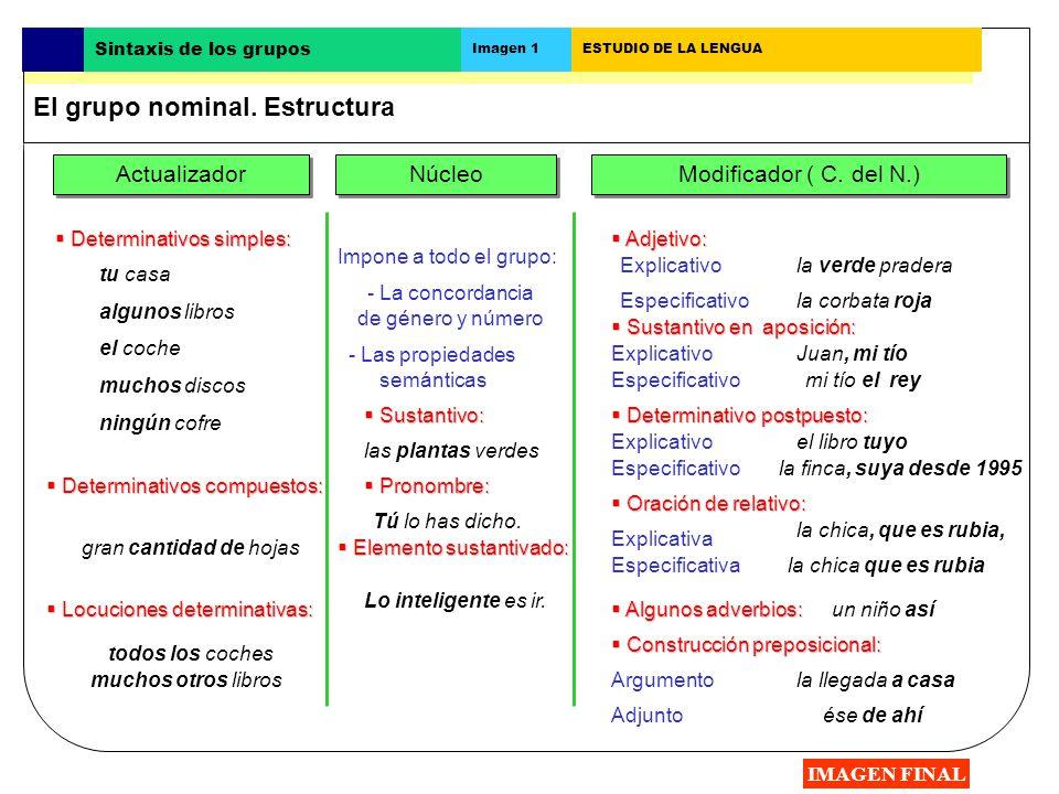 Actualizador Núcleo Modificador ( C. del N.) Impone a todo el grupo: - La concordancia de género y número - Las propiedades semánticas Determinativos