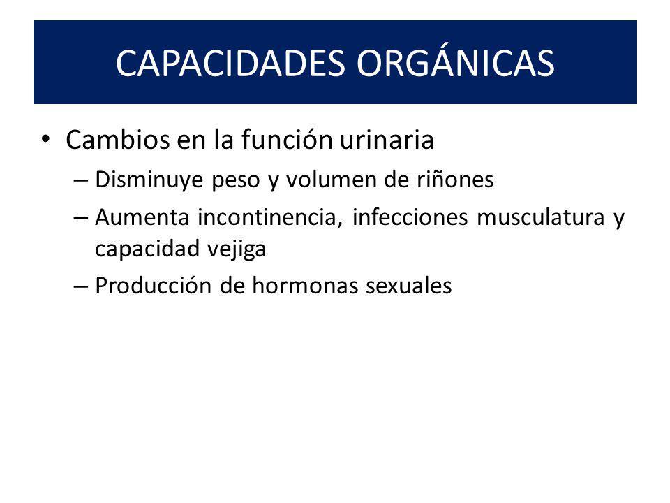 CAPACIDADES ORGÁNICAS Cambios en la función urinaria – Disminuye peso y volumen de riñones – Aumenta incontinencia, infecciones musculatura y capacidad vejiga – Producción de hormonas sexuales