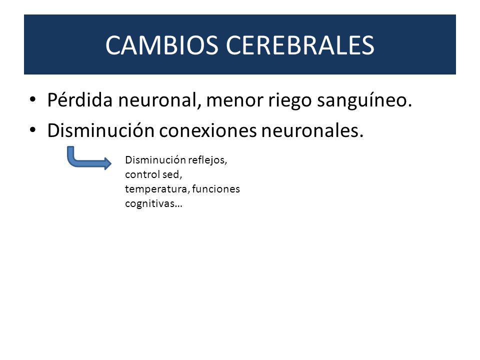 CAMBIOS CEREBRALES Pérdida neuronal, menor riego sanguíneo. Disminución conexiones neuronales. Disminución reflejos, control sed, temperatura, funcion