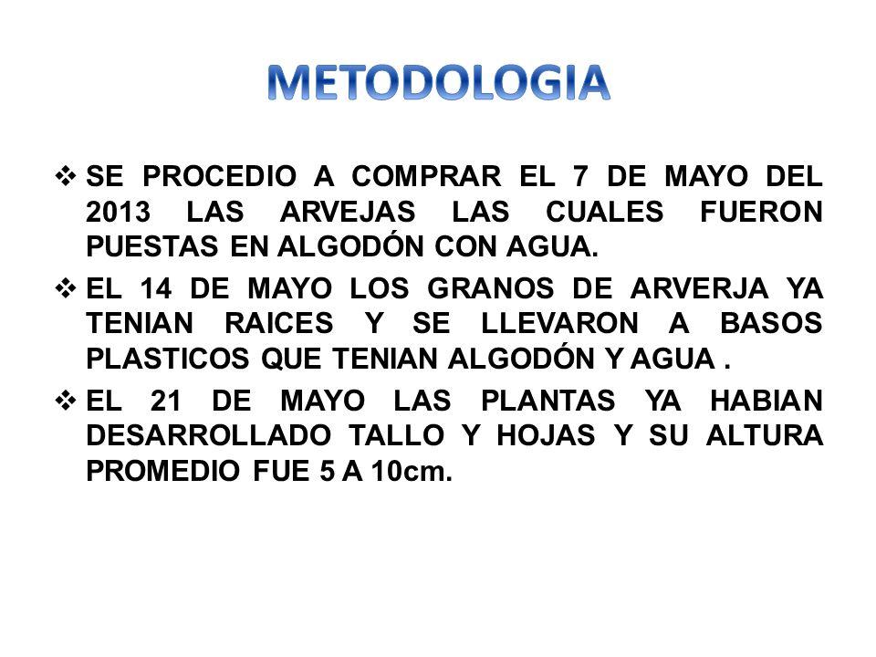 SE PROCEDIO A COMPRAR EL 7 DE MAYO DEL 2013 LAS ARVEJAS LAS CUALES FUERON PUESTAS EN ALGODÓN CON AGUA.