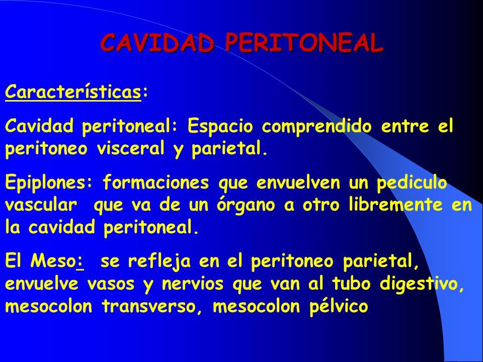 CAVIDAD PERITONEAL Características: Cavidad peritoneal: Espacio comprendido entre el peritoneo visceral y parietal. Epiplones: formaciones que envuelv