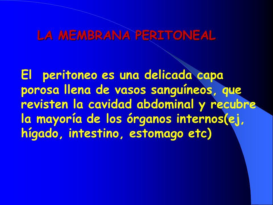 LA MEMBRANA PERITONEAL El peritoneo es una delicada capa porosa llena de vasos sanguíneos, que revisten la cavidad abdominal y recubre la mayoría de l