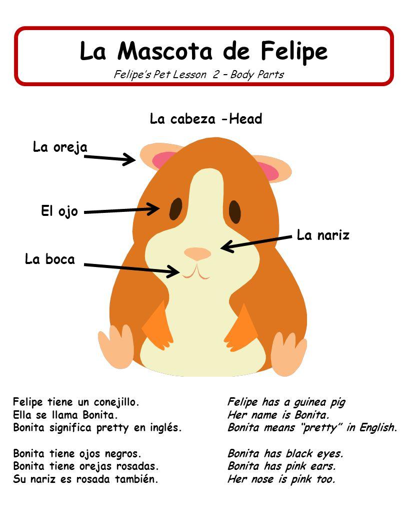 La Mascota de Felipe Felipes Pet Lesson 3 – Body Parts Bonita tiene cuatro piernas y cuatro patas con dedos.