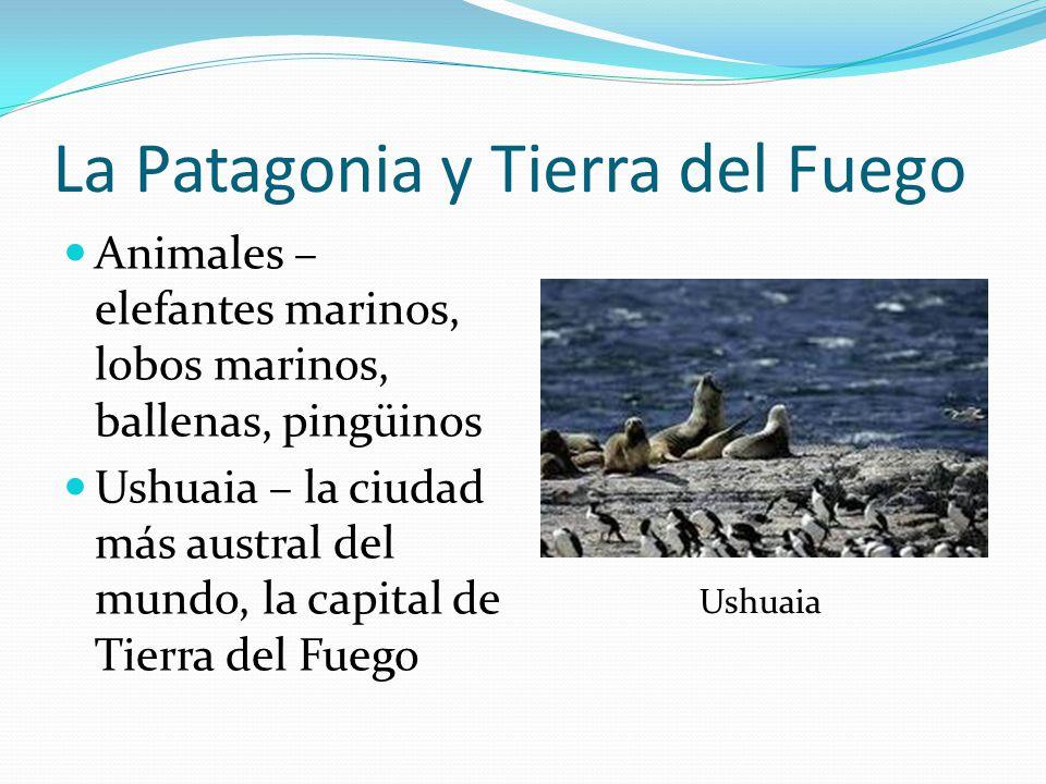 La Patagonia y Tierra del Fuego Animales – elefantes marinos, lobos marinos, ballenas, pingüinos Ushuaia – la ciudad más austral del mundo, la capital