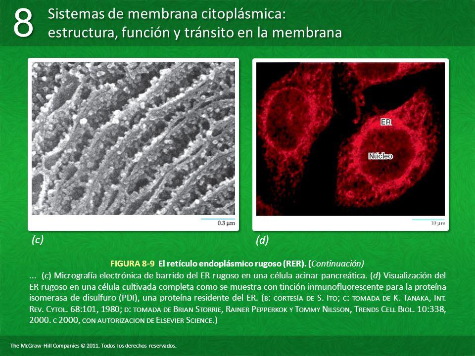 The McGraw-Hill Companies © 2011. Todos los derechos reservados. Sistemas de membrana citoplásmica: estructura, función y tránsito en la membrana 8 8