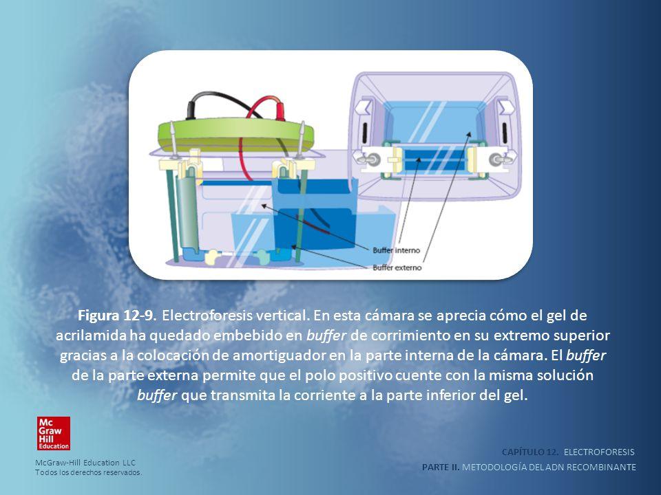 CAPÍTULO 12. ELECTROFORESIS PARTE II. METODOLOGÍA DEL ADN RECOMBINANTE Figura 12-9. Electroforesis vertical. En esta cámara se aprecia cómo el gel de