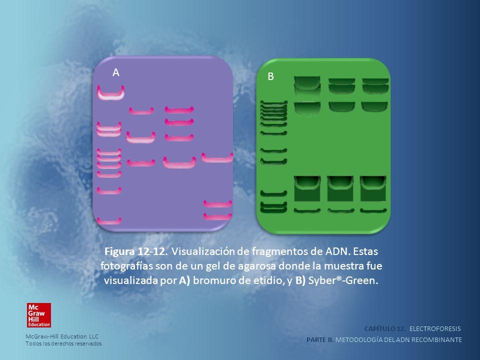 CAPÍTULO 12. ELECTROFORESIS PARTE II. METODOLOGÍA DEL ADN RECOMBINANTE A B Figura 12-12. Visualización de fragmentos de ADN. Estas fotografías son de