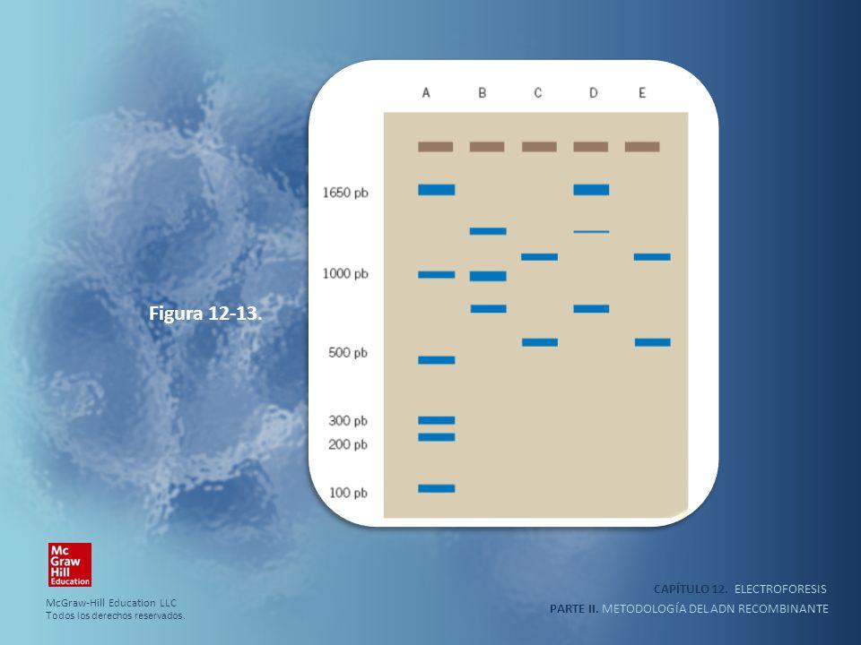 CAPÍTULO 12. ELECTROFORESIS PARTE II. METODOLOGÍA DEL ADN RECOMBINANTE Figura 12-13. McGraw-Hill Education LLC Todos los derechos reservados.
