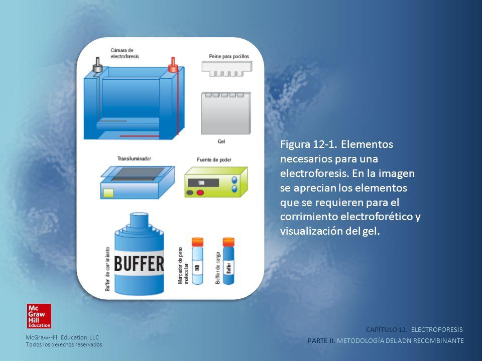 CAPÍTULO 12. ELECTROFORESIS PARTE II. METODOLOGÍA DEL ADN RECOMBINANTE Figura 12-1. Elementos necesarios para una electroforesis. En la imagen se apre