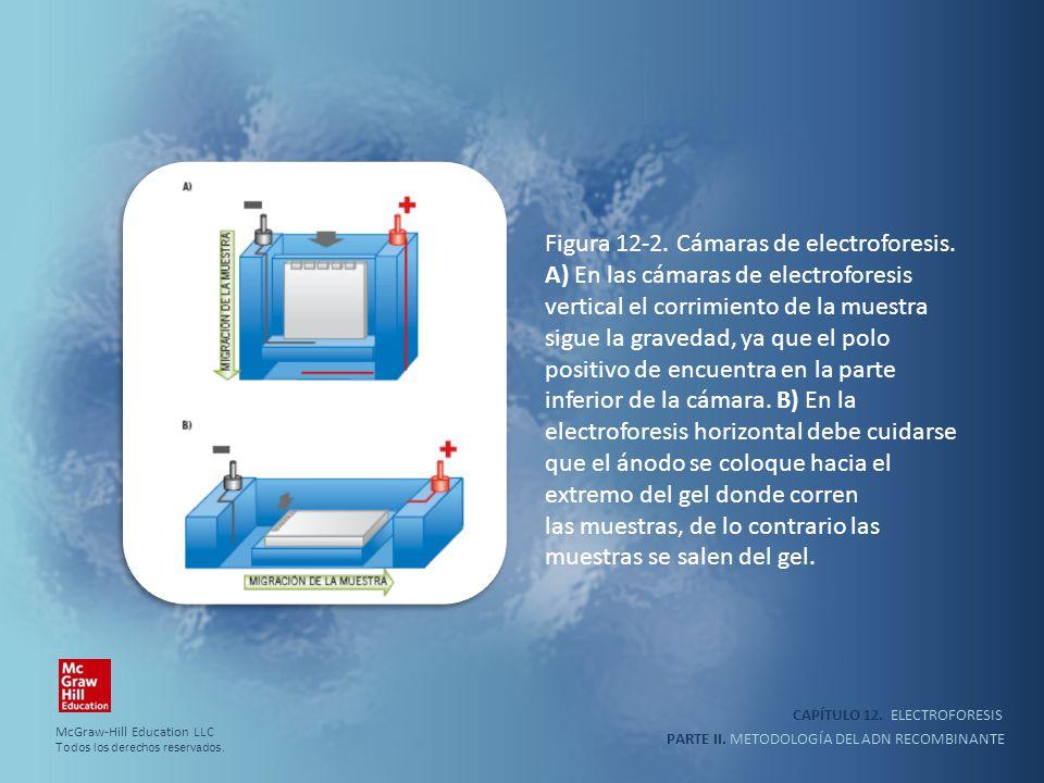 CAPÍTULO 12. ELECTROFORESIS PARTE II. METODOLOGÍA DEL ADN RECOMBINANTE Figura 12-2. Cámaras de electroforesis. A) En las cámaras de electroforesis ver