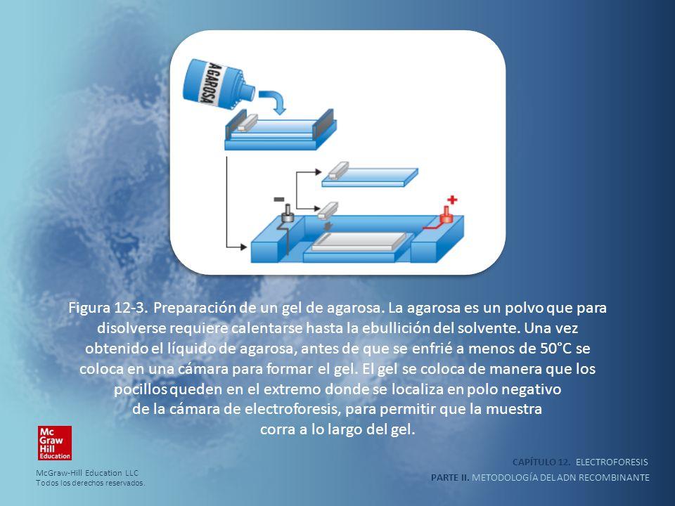 CAPÍTULO 12. ELECTROFORESIS PARTE II. METODOLOGÍA DEL ADN RECOMBINANTE Figura 12-3. Preparación de un gel de agarosa. La agarosa es un polvo que para