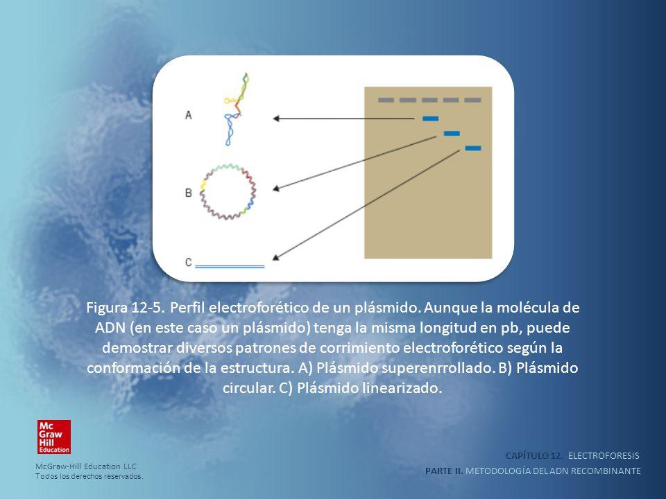 CAPÍTULO 12. ELECTROFORESIS PARTE II. METODOLOGÍA DEL ADN RECOMBINANTE Figura 12-5. Perfil electroforético de un plásmido. Aunque la molécula de ADN (