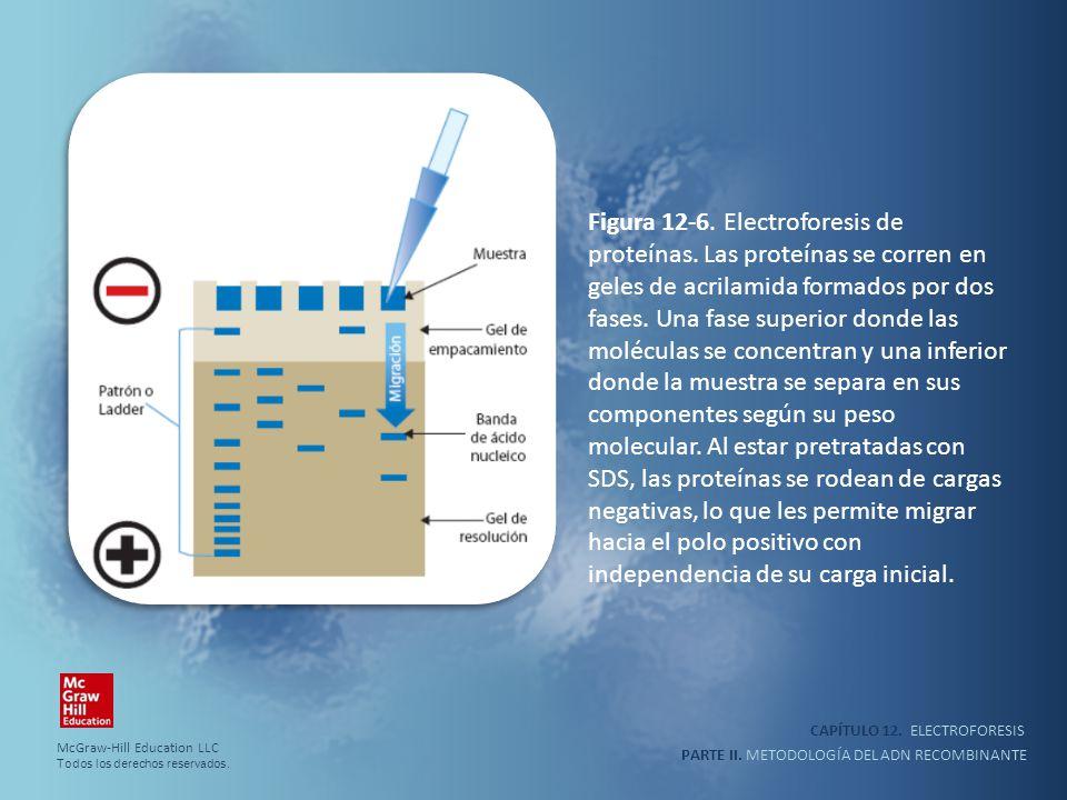 CAPÍTULO 12. ELECTROFORESIS PARTE II. METODOLOGÍA DEL ADN RECOMBINANTE Figura 12-6. Electroforesis de proteínas. Las proteínas se corren en geles de a