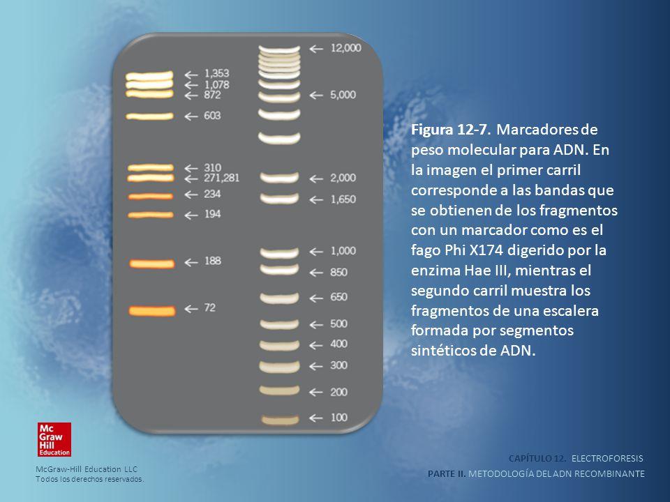 CAPÍTULO 12. ELECTROFORESIS PARTE II. METODOLOGÍA DEL ADN RECOMBINANTE Figura 12-7. Marcadores de peso molecular para ADN. En la imagen el primer carr