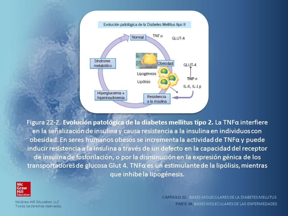 CAPÍTULO 22. BASES MOLECULARES DE LA DIABETES MELLITUS PARTE III. BASES MOLECULARES DE LAS ENFERMEDADES Figura 22-2. Evolución patológica de la diabet