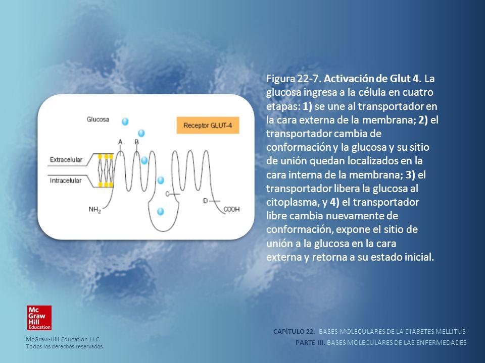 CAPÍTULO 22. BASES MOLECULARES DE LA DIABETES MELLITUS PARTE III. BASES MOLECULARES DE LAS ENFERMEDADES Figura 22-7. Activación de Glut 4. La glucosa