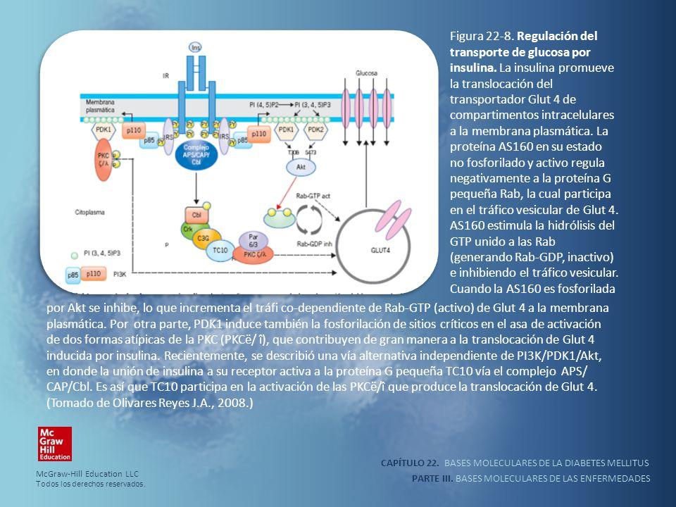 CAPÍTULO 22. BASES MOLECULARES DE LA DIABETES MELLITUS PARTE III. BASES MOLECULARES DE LAS ENFERMEDADES Figura 22-8. Regulación del transporte de gluc