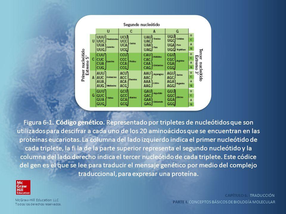 PARTE I. CONCEPTOS BÁSICOS DE BIOLOGÍA MOLECULAR CAPÍTULO 6. TRADUCCIÓN Figura 6-1. Código genético. Representado por tripletes de nucleótidos que son