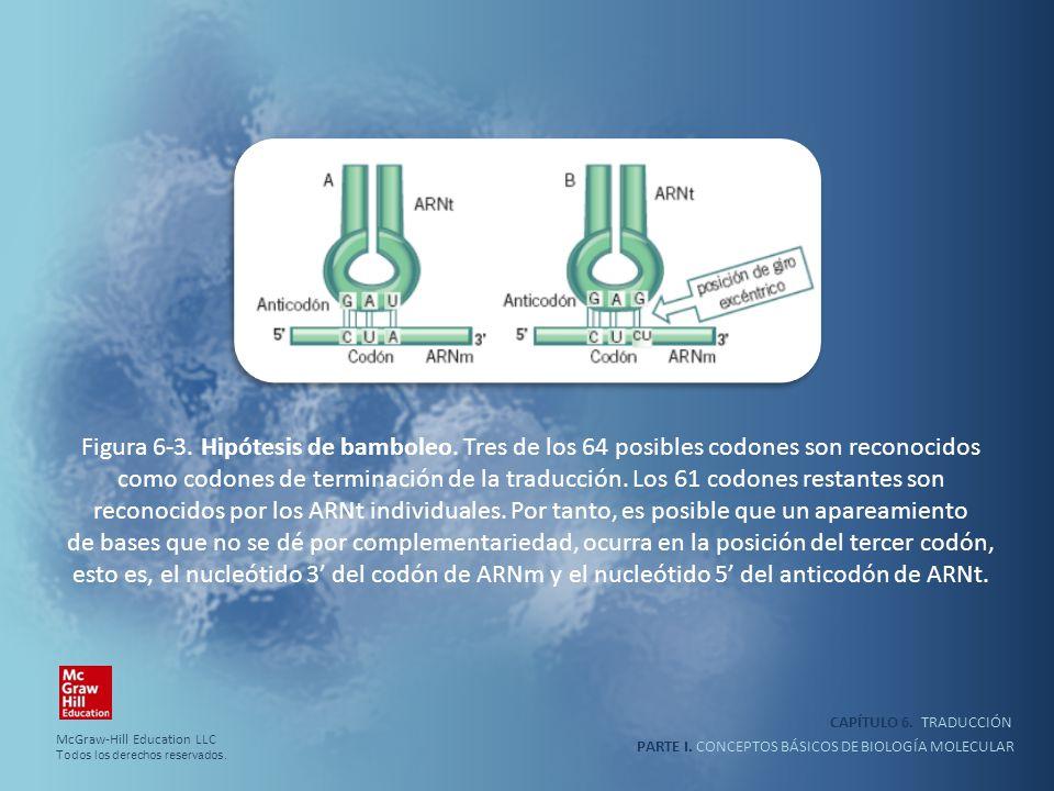 PARTE I. CONCEPTOS BÁSICOS DE BIOLOGÍA MOLECULAR CAPÍTULO 6. TRADUCCIÓN Figura 6-3. Hipótesis de bamboleo. Tres de los 64 posibles codones son reconoc