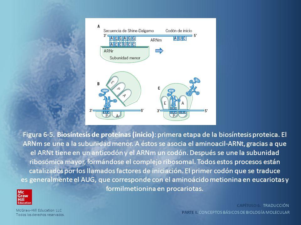 PARTE I. CONCEPTOS BÁSICOS DE BIOLOGÍA MOLECULAR CAPÍTULO 6. TRADUCCIÓN Figura 6-5. Biosíntesis de proteínas (inicio): primera etapa de la biosíntesis