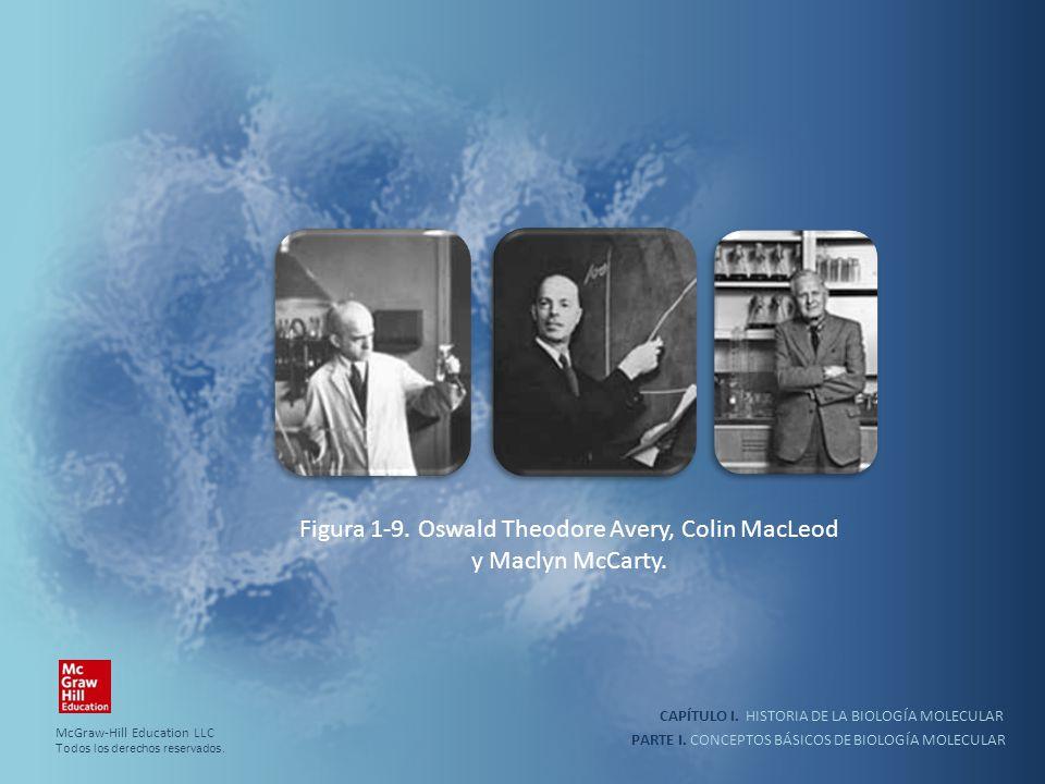 PARTE I. CONCEPTOS BÁSICOS DE BIOLOGÍA MOLECULAR CAPÍTULO I. HISTORIA DE LA BIOLOGÍA MOLECULAR Figura 1-9. Oswald Theodore Avery, Colin MacLeod y Macl