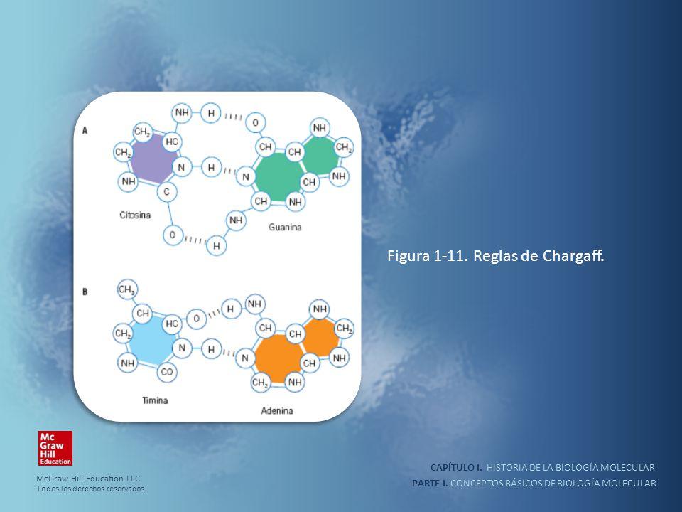 PARTE I. CONCEPTOS BÁSICOS DE BIOLOGÍA MOLECULAR CAPÍTULO I. HISTORIA DE LA BIOLOGÍA MOLECULAR Figura 1-11. Reglas de Chargaff. McGraw-Hill Education