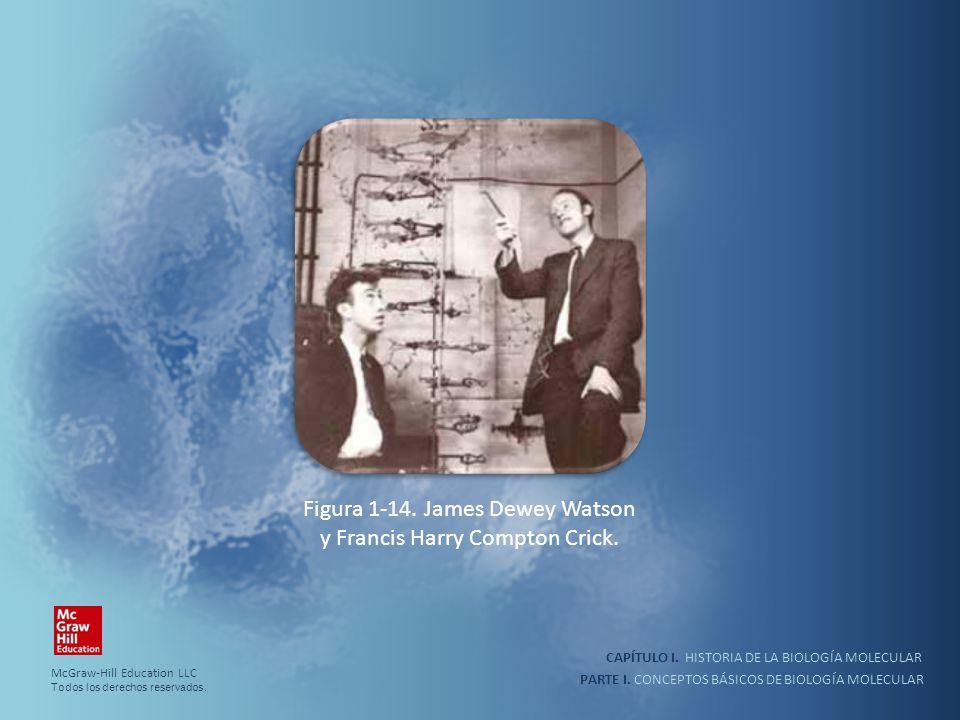 PARTE I. CONCEPTOS BÁSICOS DE BIOLOGÍA MOLECULAR CAPÍTULO I. HISTORIA DE LA BIOLOGÍA MOLECULAR Figura 1-14. James Dewey Watson y Francis Harry Compton