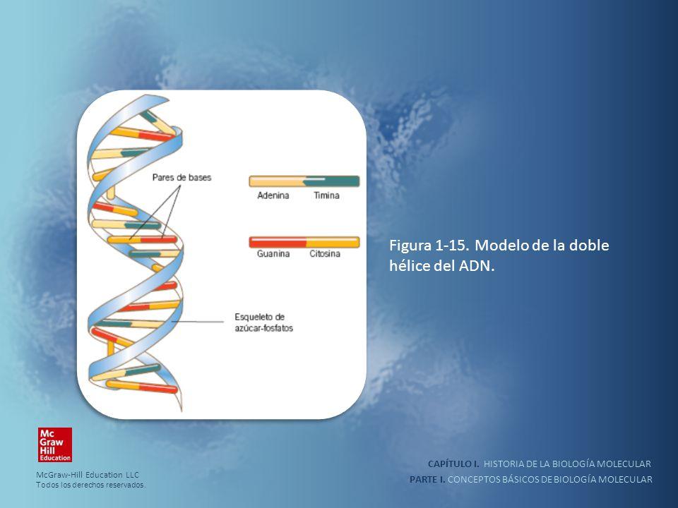 PARTE I. CONCEPTOS BÁSICOS DE BIOLOGÍA MOLECULAR CAPÍTULO I. HISTORIA DE LA BIOLOGÍA MOLECULAR Figura 1-15. Modelo de la doble hélice del ADN. McGraw-