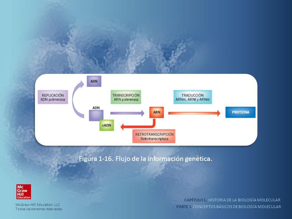 PARTE I. CONCEPTOS BÁSICOS DE BIOLOGÍA MOLECULAR CAPÍTULO I. HISTORIA DE LA BIOLOGÍA MOLECULAR Figura 1-16. Flujo de la información genética. McGraw-H